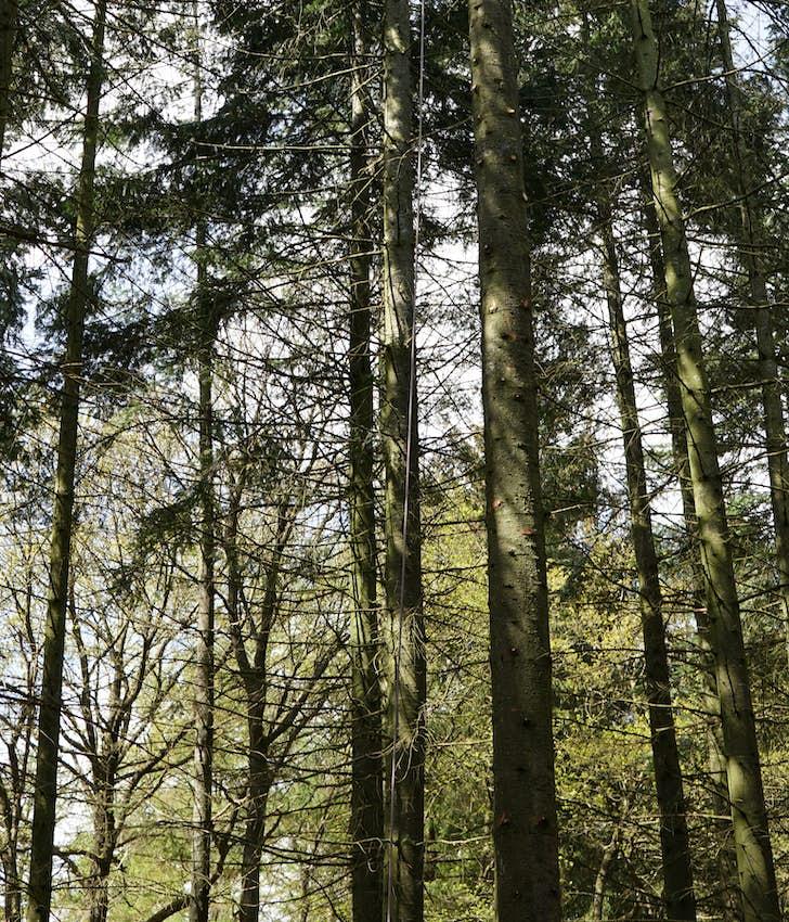 Skovens dag i Ansager Plantage