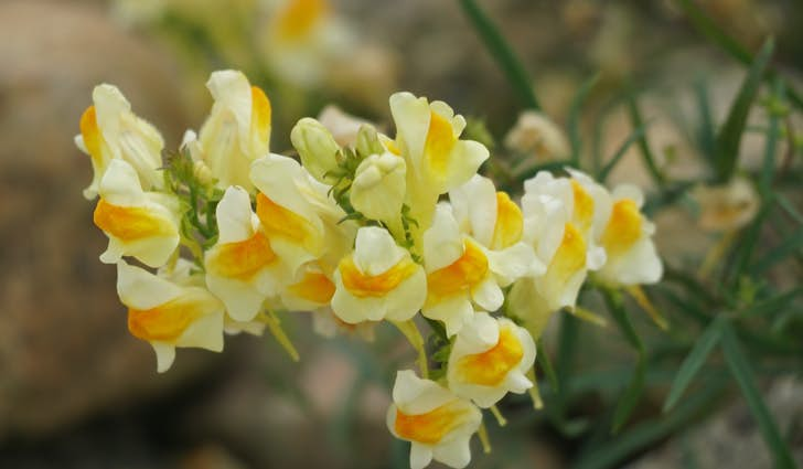 Filsø - Det botaniske mirakel