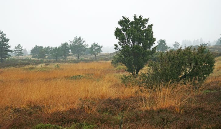 Klelund Plantage