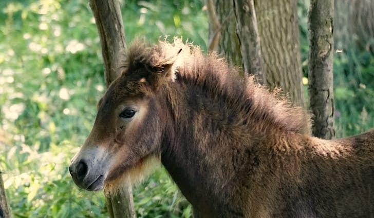 Vilde heste på Langeland