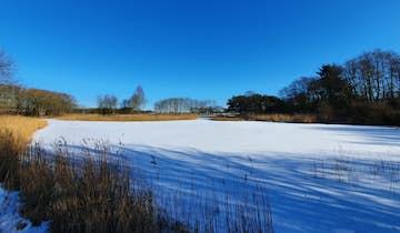 Svanesøen i Ølgod