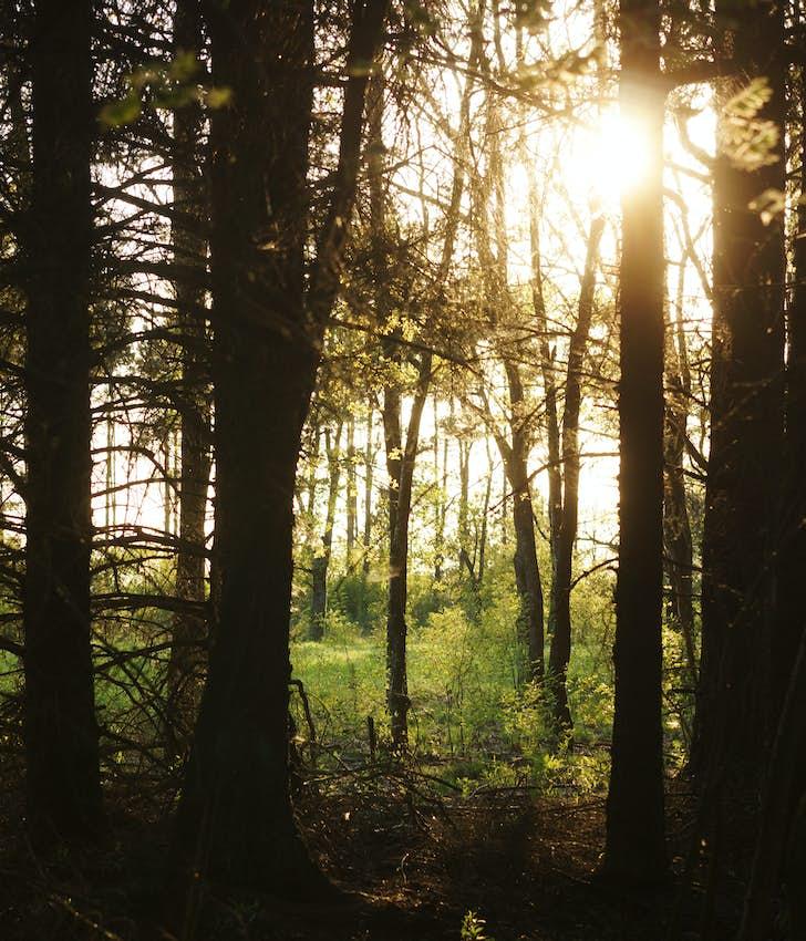 Skovsnogen